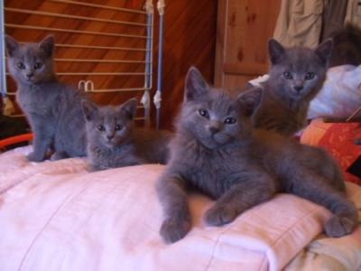 Le Bon Coin Chatons Chartreux Pour Adoption Yootoo Fr